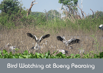 Boeng Pearaing Bird Watching Tour