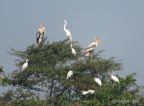 Painted Stork and Egreat